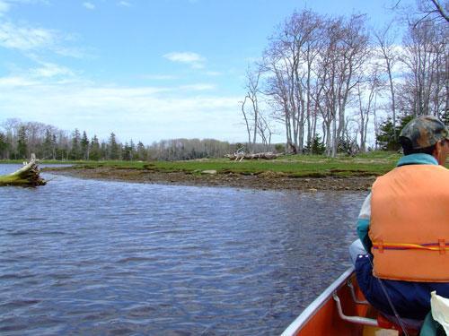 Estuary Boat Trip